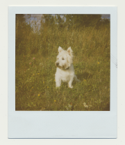 Polaroid Series 2000S - 5 of 7